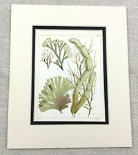 1857 Antique 19th Century Hand Coloured Seaweed Print Botanical Sea Plants