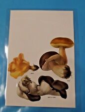 Art print affiche thermoplastique planche ancienne Bolet Cèpe Girolle agaric