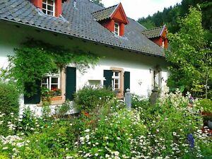 Flower Cottage Garden Mix 500+ Seeds - Throw & Grow - 7 Different Flowers