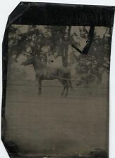 ANTIQUE TINTYPE RARE HORSE AND BUGGY IN MOTION.