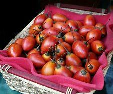 ☺30 graines de tamarillo/ tomate en arbre
