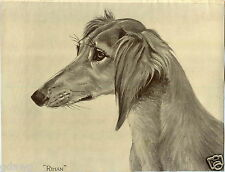 1930 Book Plate Dog Print Saluki Sketch Rihan