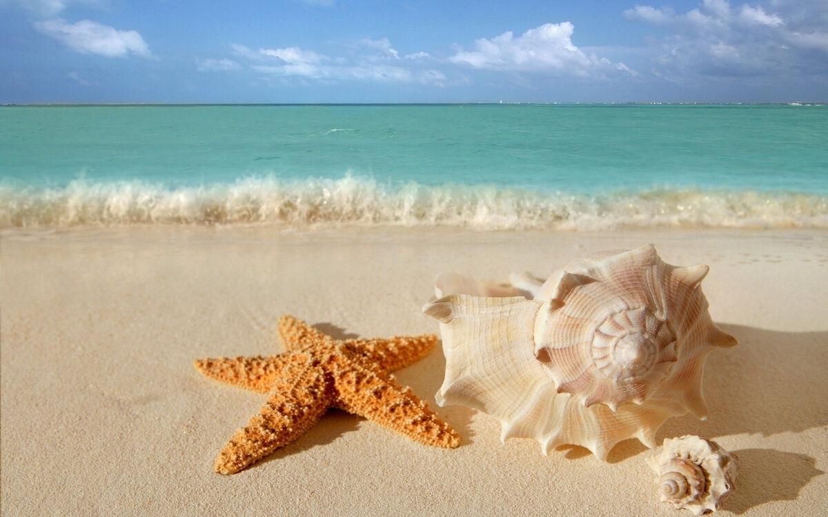 Sandy Beach Dreaming