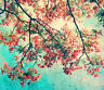 3D Blooming Branch Wall Paper Wall Print Decal Wall Deco Indoor wall Murals Wall