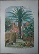 1872 Bryant print DATE PALM IN ST. AUGUSTINE, FLORIDA (#189)