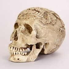 A CARVED Kapala Skull Human Anatomical Anatomy Head Medical Model lifesize TY