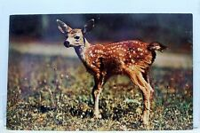 Animal Deer Little Dear Sends Greetings Postcard Old Vintage Card View Standard