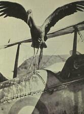 "British Aircraft World War 1 With Stork RAF British Army, 5.5x4"" Reprint a"
