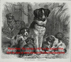 Dog Great Pyrenees Mother & Puppies, Historic 1870s Antique Engraving Print