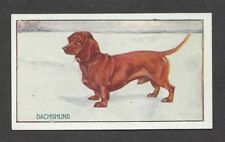 1926 UK George Vernon Stokes Dog Art Sanders Custard Card SMOOTH DACHSHUND