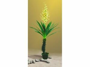 Yuccapalme 40Blatt m.Blütenstaude   im Topf    222cm