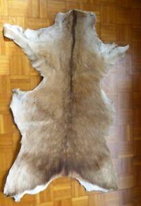 antique/vintage animal hide/rug- goat or small deer??