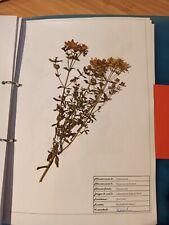Herbarium Heilpflanzen