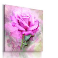 PAINTING DRAWING PINK ROSES FLOWERS VISUAL ART PRINT Canvas Wall  R16 MATAGA .