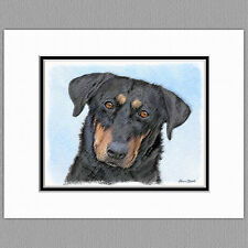 Beauceron Dog Original Art Print 8x10 Matted to 11x14