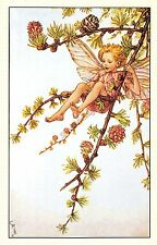 Flower Faires Postcard Cicley Mary Barker The Larch Fairy Lot1