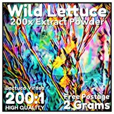 Wild Lettuce (Lactuca Virosa) 200x Extract Powder [2 Grams]