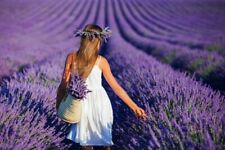 200Pcs Aromatic Lavender Flowers Seeds Beautiful Best Fragrance In Your Home🌿