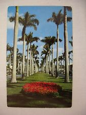 VINTAGE PHOTO POSTCARD OF ROYAL PALMWAY IN PALM BEACH, FLORIDA UNUSED