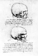 Leonardo Da Vinci Right side view of a Skull  Anatomy Poster Print Art