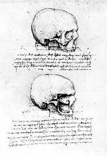 Leonardo Da Vinci Right side view of a Skull  Anatomy Poster Print Art