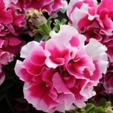 Artículos rosas Blanco para terraza y jardín