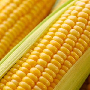 Sweetcorn Sweet Corn Seeds F1 Golden Phoenix | 50 Seeds