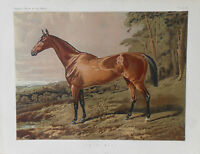 1876 Antique Victorian Chromo Racing Print Cassell's Book of the HORSE FAIR NELL