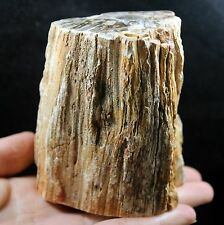 787g POLISHED PETRIFIED WOOD FOSSIL AGATE BRANCH Crystal Madagascar