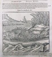 Ichthyology 1614 Diodon Primate Monkey Falconer Raptor Camel Engraving On Wood