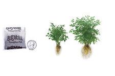 500-pack Ecto Endo Mycorrhizal Transplant Paks for Trees Shrubs Root Building