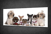 SITTING DOGS ANIMALS CANVAS WALL ART PRINT POSTER PICTURE READY TO HANG