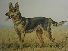 1935 PRINT BERGER ALLEMAND GERMAN SHEPHERD  HAND SIGNED PAUL WOOD DOG ETCHING