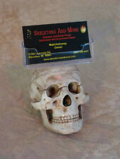 Skull Business Card Holder, Halloween Prop Human Skull