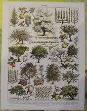 Ancienne Gravure Larousse 1950 Art Print on Original Antique Book Page Verger