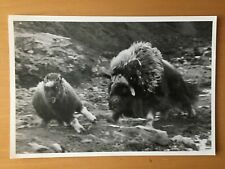 RARE SCIENCE TV SCENIC: National Geographic Society Animal Publicity Photo