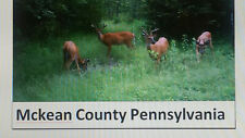 2020 Pennsylvania Deer / Bear Archery / Muzzleloader Hunt 1 Buck, 2 Doe,1 Bear