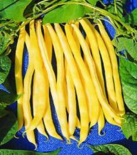 Bohnen Stangenbohnen Gelbe Neckargold Samen