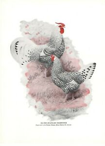 Silver Spangled Hamburgs L A Stahmer 1926-52 Poultry Tribune Reprint