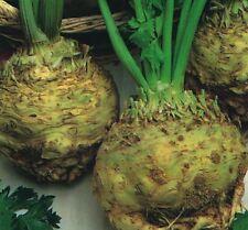 Légumes - Céleri Géant Prague - 25 Grammes - Environ 62,000 Graines