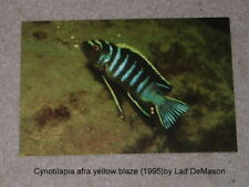 6 Tropical Fish Post Cards of Cichlids of Lake Malawi (1995) by Laif Demason