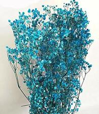 Baby's Breath - Preserved Live Plants - Light Blue