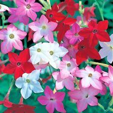1001+Flowering Tobacco Mix Seeds Hummingbirds Butterflies Garden/Patio Container