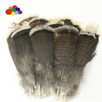 Wholesale unique wild Turkey tail feathers  3-12 inches / 8-30 cm 10-100pcs