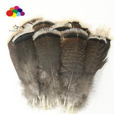 Wholesale unique wild Turkey tail feathers  3-12 inches / 8-30 cm 10-100pcs