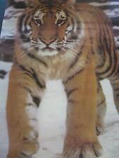 1981 Portal prowling  Tiger Jurg Klages photo vintage wall poster PBX1478