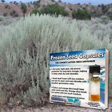 Big Sagebrush; Desert Sage (Artemisia tridentata) 100+ Medicinal Herb Seeds