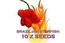 10 x BRAZILIAN STARFISH SEED HOT GREAT TASTE IDEAL EVERY DAY HEAT  - RARE CHILLI