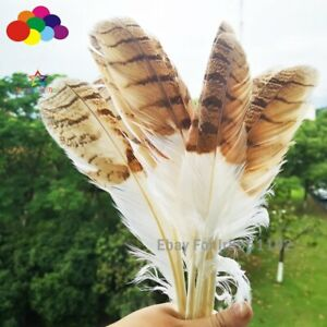 Pretty rare white and gold Feather precious 10-12 inches/25-30 cm long wings