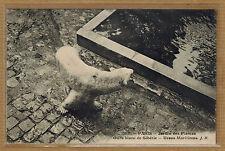 Cpa Paris Jardin des Plantes - ours banc de Sibérie wn013
